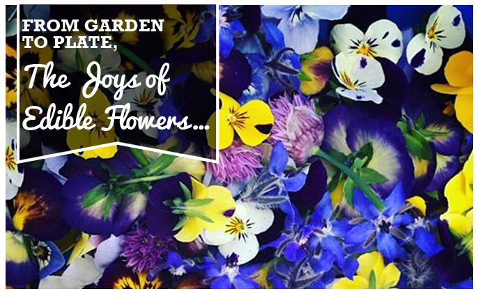 From Garden to Plate, the Joys of Edible Flower