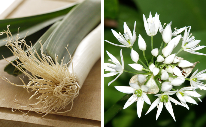 Leeks and Wild Garlic for Spring