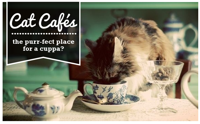 Cat cafés - the purr-fect place for a cuppa?